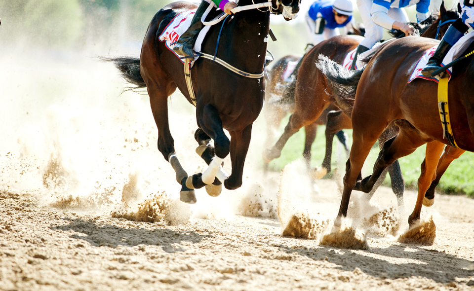 horses galloping on a hippodrome track