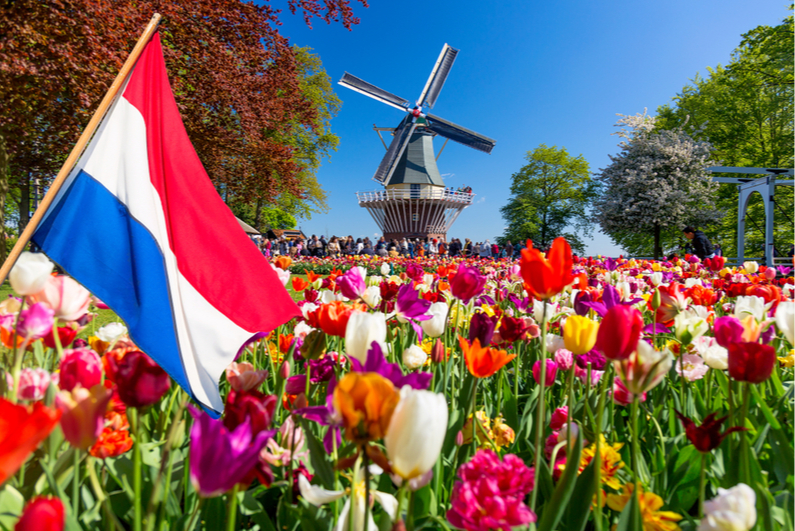 Tulip bed and Netherlands flag in the foreground with a windmill in the background