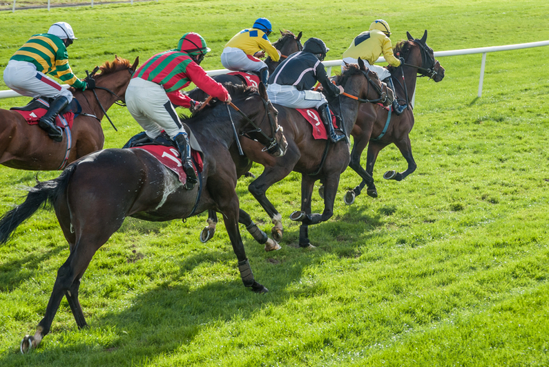 horse race on a grass track