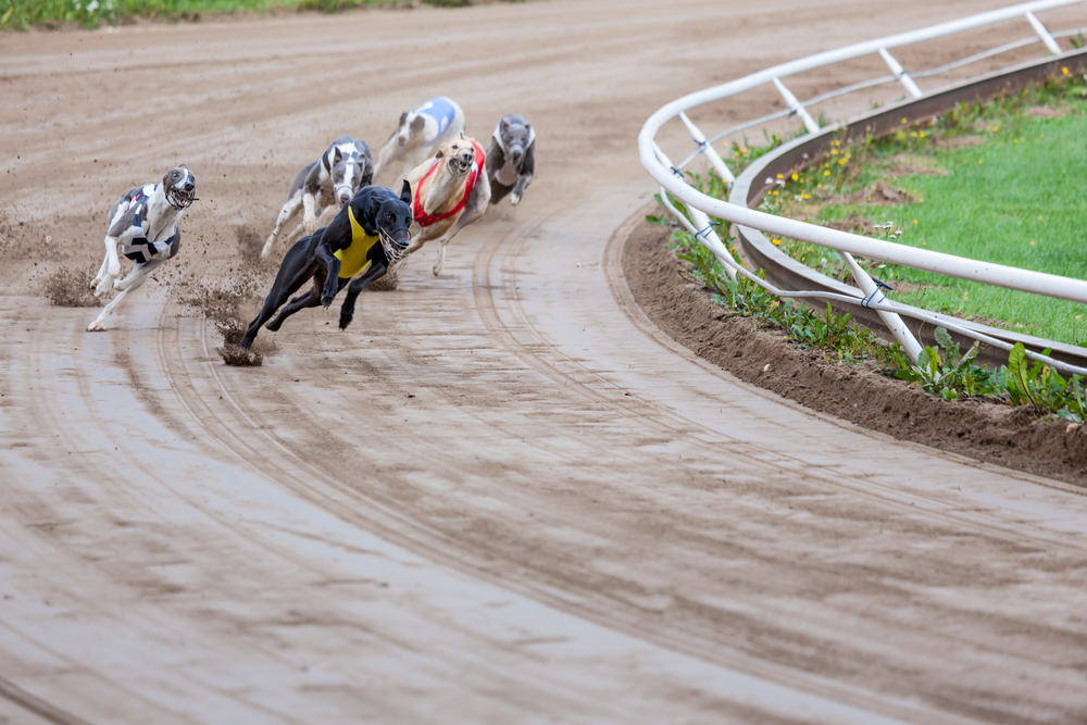 Greyhound racetrack